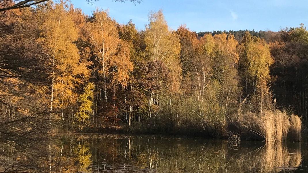 Wald an der Wehebachtalsperre